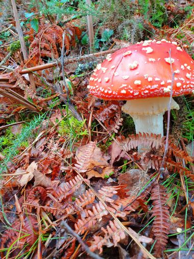 Des champignons de belles couleurs, mais pas toujours comestibles