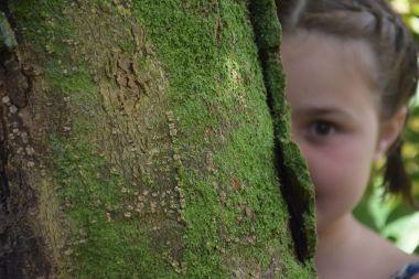 Vu? pas vu ? de beaux arbres en Périgord Vert...