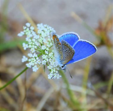 Nice flower and beautiful butterfly