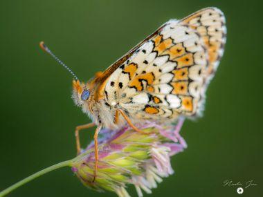 Papillon aux milles couleurs