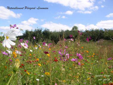 les Landes fleuries, les carrés pour la biodiversité
