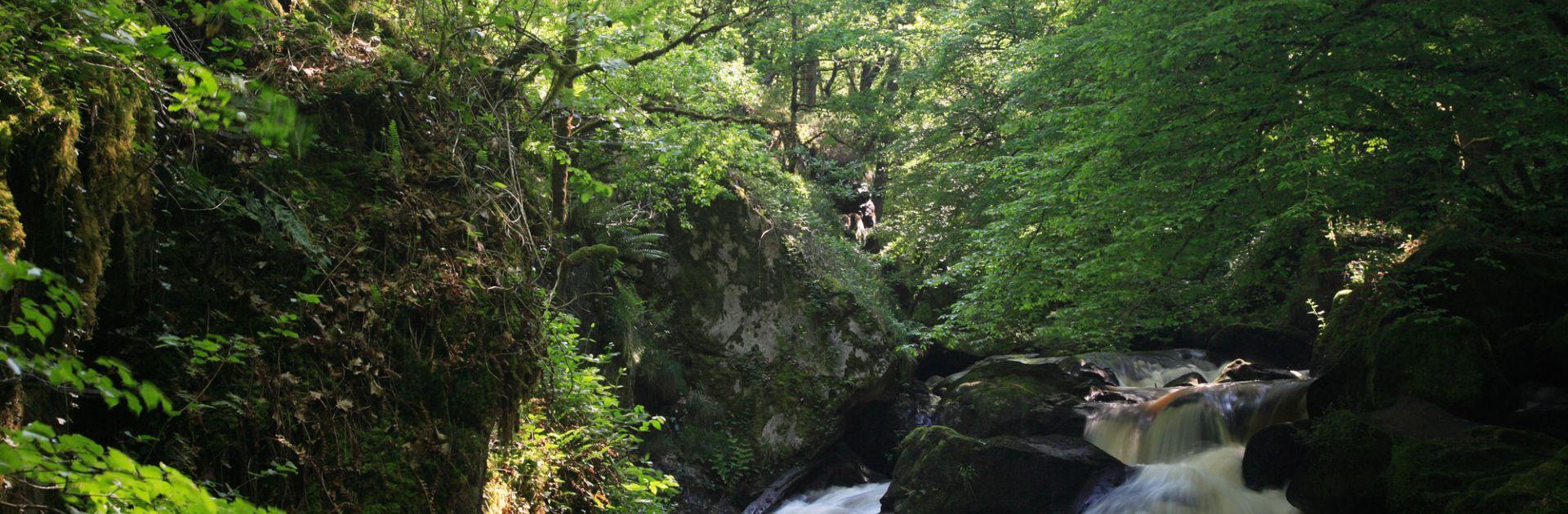 Périgord Vert camping natuur Dordogne