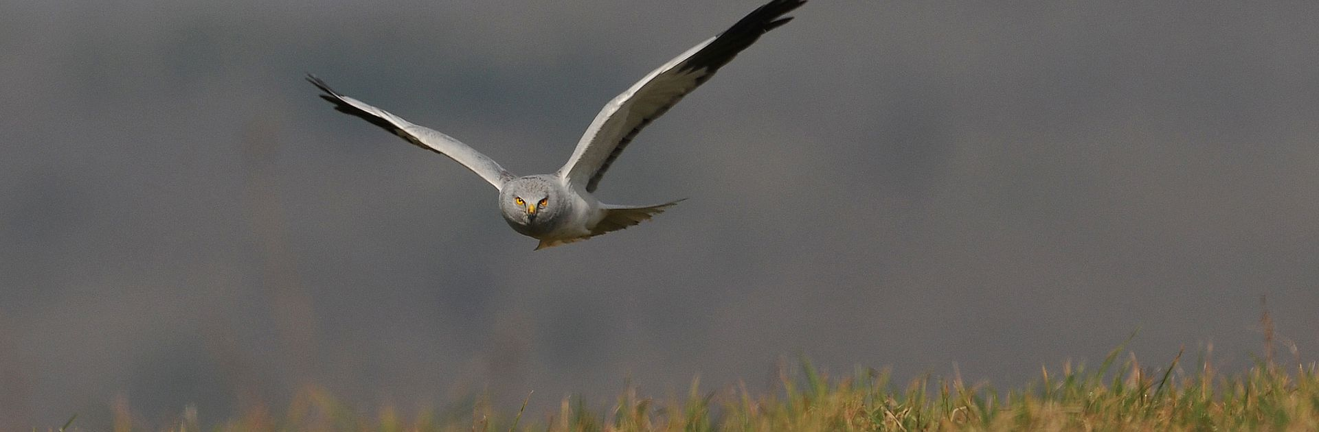 Oiseaux du Parc Naturel Régional Périgord Limousin